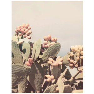 Affiche Prickly Pear -6